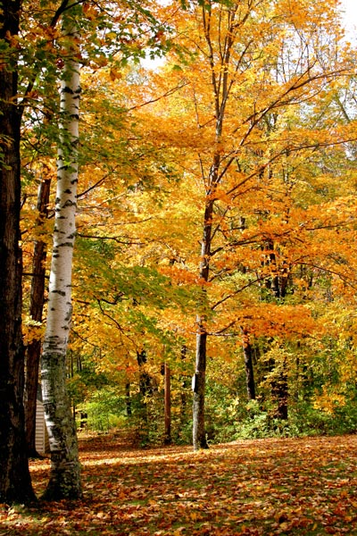 Autumn in New England - DesignLively