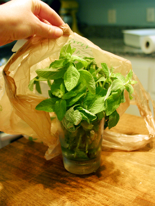 How to Keep Mint Leaves Fresh