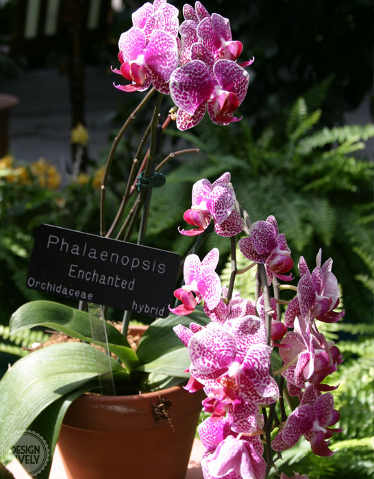 National Botanical Garden and Old Town Alexandria - DesignLively