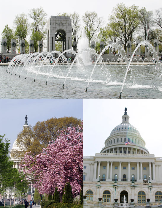 Washington DC - DesignLively